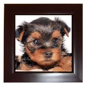 Yorkshire Terrier Puppy Dog 8 Framed Tile G0655