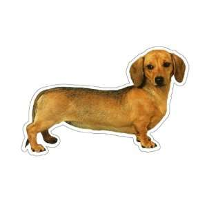 DACHSHUND   Dog Decal  sticker dogs car got window gift