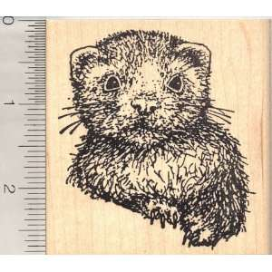 Large Baby Ferret Rubber Stamp Arts, Crafts & Sewing