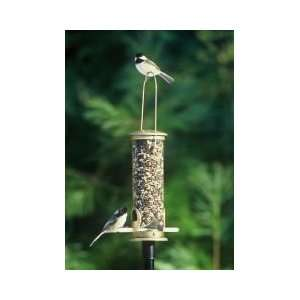 Brass Finish Tube Seed Bird Feeder   3/4 qt. Patio, Lawn